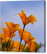 Spring Is A Poppin' Canvas Print