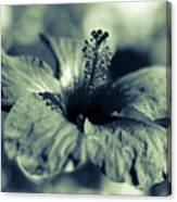 Spring Is Coming - Monochrome Canvas Print