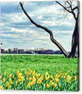 Spring Jog On The Potomac Canvas Print