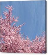 Spring Landscape Pink Trees Blossoms Blue Sky Baslee Troutman Canvas Print