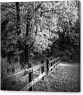 Spring Leaves B/w Canvas Print