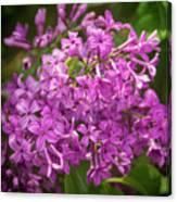Spring Lilacs On Black Canvas Print