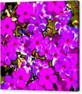 Spring Love Spca Canvas Print