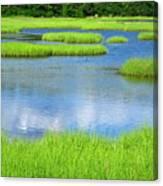 Spring Marsh Grasses Canvas Print