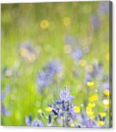 Spring Meadow 3 Canvas Print