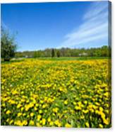 Spring Meadow Full Of Dandelions Flowers And Green Grass Canvas Print