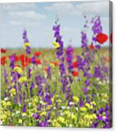 Spring Meadow With Flowers Nature Scene Canvas Print