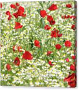 Spring Meadow With Poppy And Chamomile Flowers Canvas Print