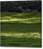 Spring Meadows Of Wildflowers Canvas Print