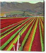 Spring Mix Lettuce Fields Canvas Print