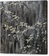 Spring Mystery Canvas Print