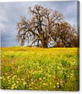 Spring Oak Tree And Wildflowers Canvas Print