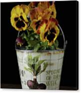 Spring Pansy Flowers In A Pail Canvas Print