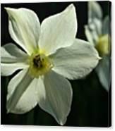 Spring Perennial Canvas Print