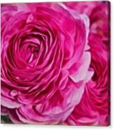 Spring Pink Roses Canvas Print