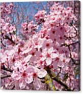 Spring Pink Tree Blossoms Art Print Baslee Troutman Canvas Print