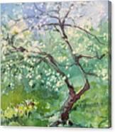 Spring Plum Canvas Print