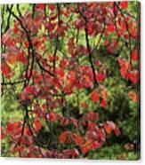 Spring Rain In Descanso Gardens Canvas Print