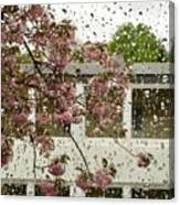Spring Rain Outside The Window And Sakura Canvas Print