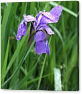 Spring Rain Canvas Print