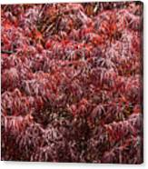 Spring Reds Canvas Print