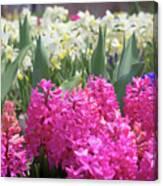 Spring Round Up Canvas Print