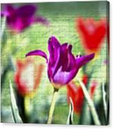 Spring Sensations  Canvas Print