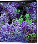 Spring Series #07 Canvas Print