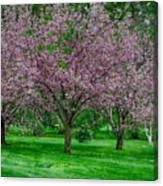 Spring Series #09 Canvas Print