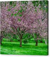 Spring Series #20 Canvas Print