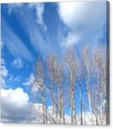 Spring Sky And Cotton Trees Canvas Print