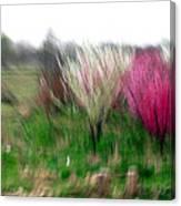 Spring Smell Canvas Print