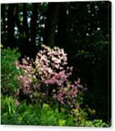 Spring Spotlight Canvas Print