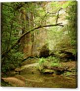 Spring Stream Canvas Print