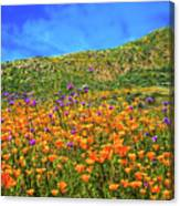 Spring Superbloom In Walker Canyon Canvas Print