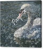 Spring Swan Canvas Print