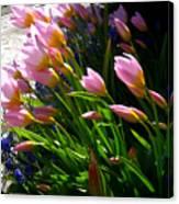 Spring Tenderness Canvas Print