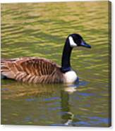 Spring Time Goose Canvas Print