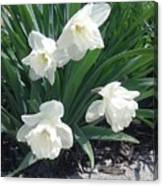 Spring Time Trumpets  Canvas Print