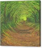 Spring Tree Tunnel Canvas Print