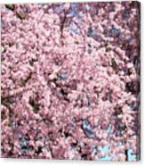 Spring Trees Art Prints Pink Springtime Blossoms Baslee Troutman Canvas Print