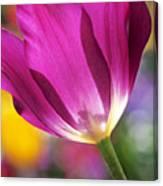 Spring Tulip Canvas Print