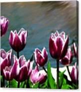 Spring Tulips 1 Canvas Print
