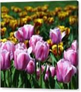 Spring Tulips 2 Canvas Print
