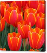 Spring Tulips 206 Canvas Print