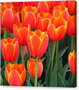 Spring Tulips 207 Canvas Print