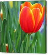 Spring Tulips 214 Canvas Print