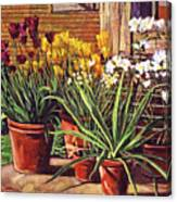 Spring Tulips And White Azaleas Canvas Print