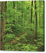 Spring Walk Canvas Print