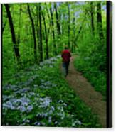 Spring Walker Canvas Print